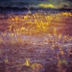 landscape-photographer-meath